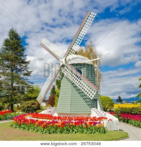Garden of tulips with windmill at Skagit, Washington State, America.