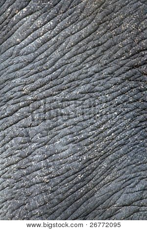 Wrinkled elephant skin (Asian elephant)