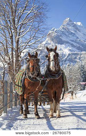 Winter in Schweizer Alpen (Paar Pferde in einem kleinen Dorf)