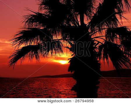 an image of sea and palm tree at sunset