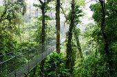 stock photo of cloud forest  - cloud forest in Monte Verde Costa Rica - JPG