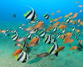 pic of school fish  - Lots of Colourful Tropical Fish - JPG