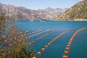 Longline Culture ( Rope Culture ) Mussel Farm.  Montenegro, Adriatic Sea, Bay Of Kotor poster