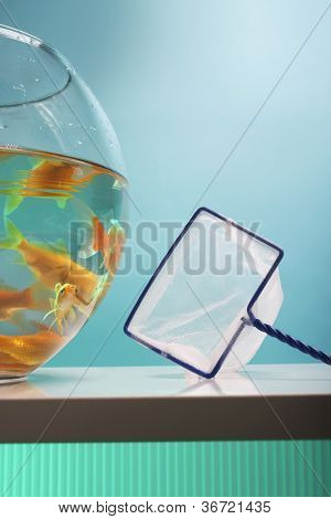 Goldfishes in fishbowl and net
