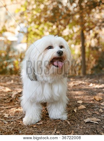 a white mixed breed dog at a public nature park