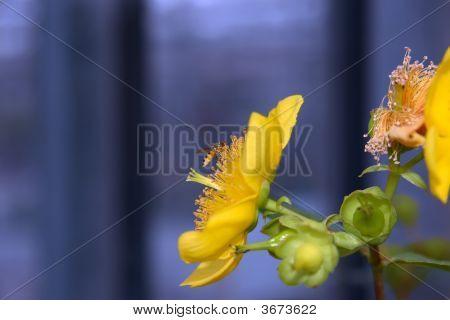 Blooming Wonderful 7