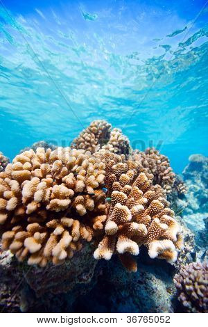 Beautiful colorful coral reef in Pacific ocean