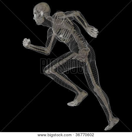 High resolution conceptual 3D wireframe or mesh human ideal for anatomy,medicine and health designs, isolated on black background. It is a man made of a skeleton and a black body as in a x-ray
