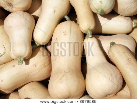 Butternute Squash