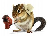 foto of chipmunks  - Funny chipmunk cowboy with stick horse on white - JPG