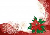 Christmas Background With Poinsettia