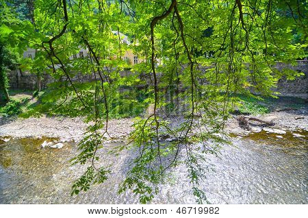 Tree leaves against river