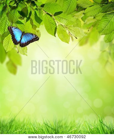 Green hornbeam leaves with butterfly