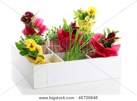 Beautiful spring flowers and grass in wooden crate isolated on white