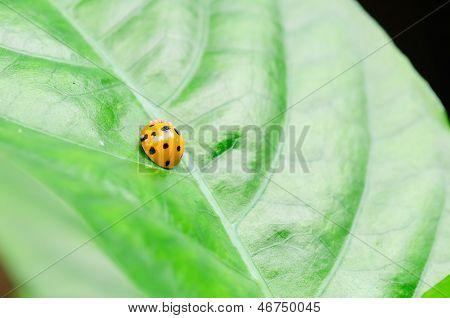 One Ladybird