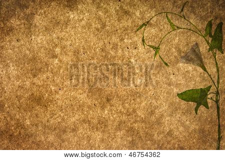 Old Paper Textures With Plant
