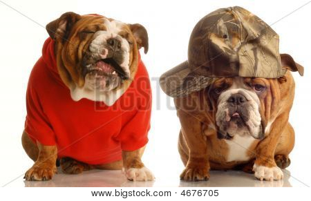 Bulldogs Sharing A Joke