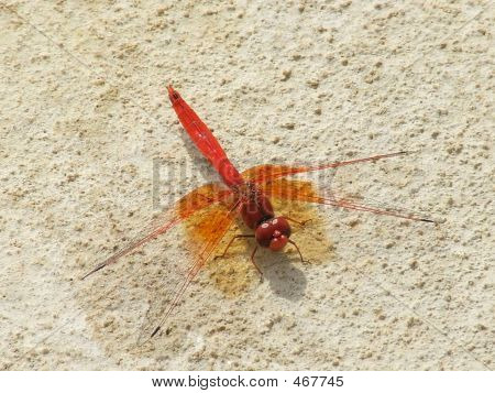 Colorful Dragon Fly