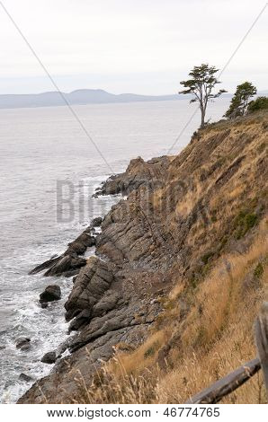 Magellanic Coast And Lonely Tree