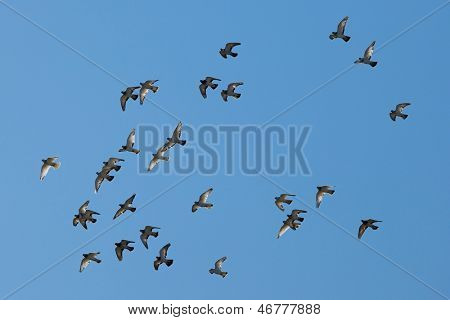 Birds flying against blue sky
