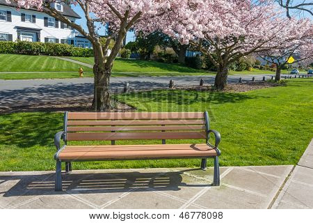 Park Bench Under Cherry Trees in Bloom