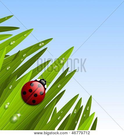 Morning Grass And Ladybug