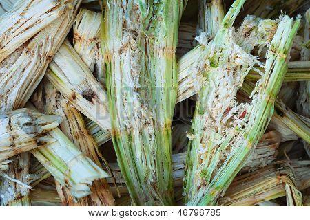 Sugarcane Bagasse - Organic Waste