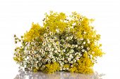 image of ragweed  - Summer bouquet of wild flowers on a white background - JPG