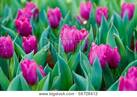 Beautiful spring flowers in garden north of thailand