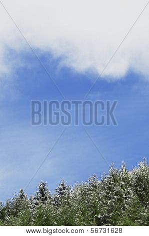 snowy pine forest and blue sky with white clouds in Tena Valley, Pyrenees, Huesca, Aragon, Spain