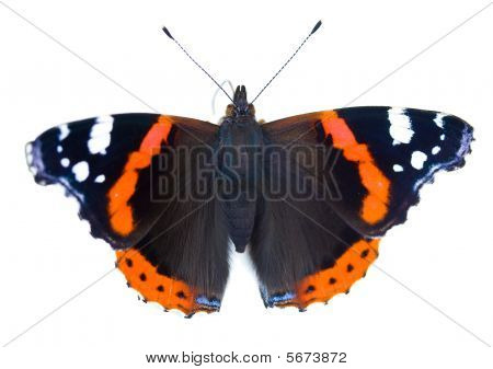 Painted Lady Butterfly Isolated