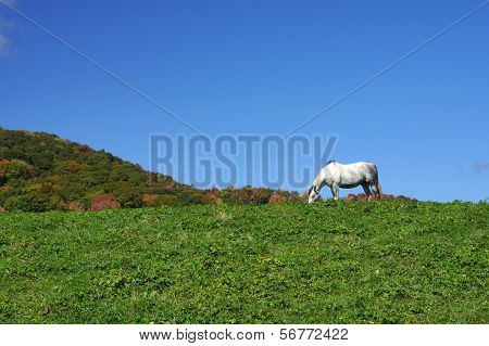 White Horse on a Mountain