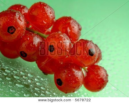 Red Currants With Waterdrops On Green Background
