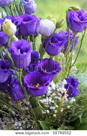 Close-up Bouquet Of Blue Flowers