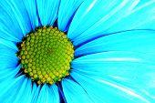 Blue Petals-2 poster