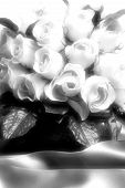 White Roses In Black And White poster