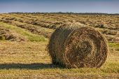 stock photo of hay bale  - Hay bales on the field after harvest in rural Prince Edward Island - JPG