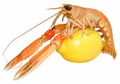 stock photo of norway lobster  - A single langoustine shellfish with lemon - JPG