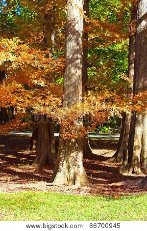 Old trees decorated by colorful autumn foliage.