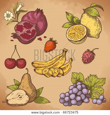 Vector Engraving Sweet Fruits And Berries
