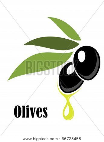 Ripe black olives on a leafy twig with oil