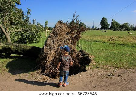 Small Boy Near Fallen Tree Blown Over By Heavy Winds