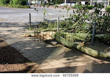Fallen Branch Of Tree Blown Over By Heavy Winds On Pavement