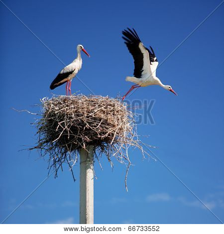 Storks on a background of blue sky