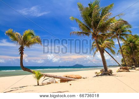 Atilt Coconut Tree On The Beach