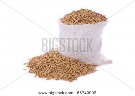 Paddy dry rice seed pile sack on white background.