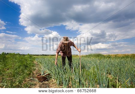 Man In Onion Field