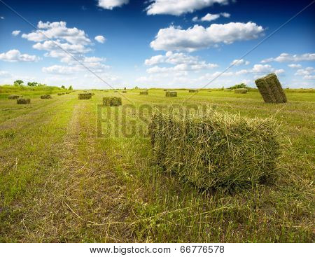 clover bales on the field beneath cloudy sky