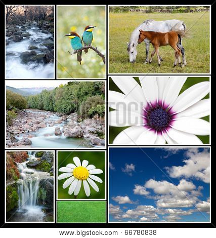 Beautiful spring landscape collage with flowers, birds, horses, rivers...