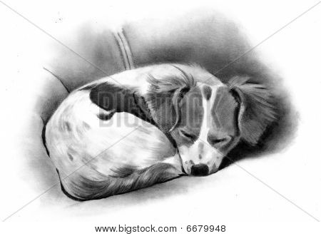Pencil Art: Puppy Asleep
